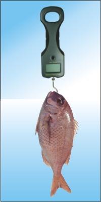 digital portable fishing scales 25kg 20g memory anf delete heaviest 9v batteries