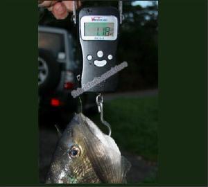 portable fishing scale 10 memory storage 50kg 10g blue backlight calibration