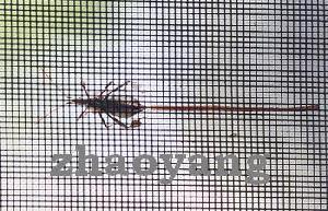 Insect Screen / Window Screen / Mosquito Wire Netting